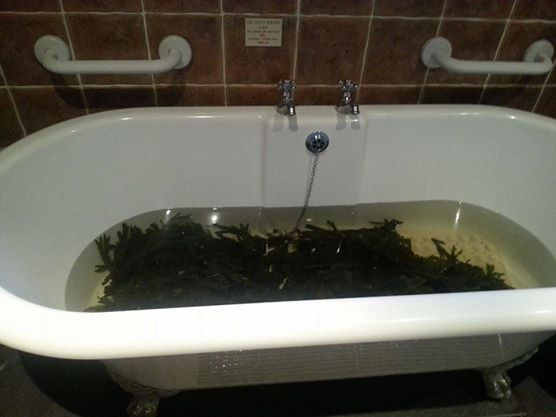 Voya Seaweed Baths