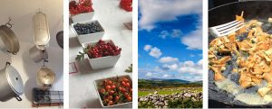 FORAGING WORKSHOP APRIL 12TH 2015
