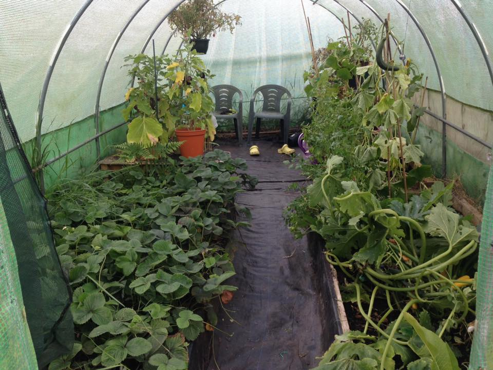 My Polytunnel where I relax