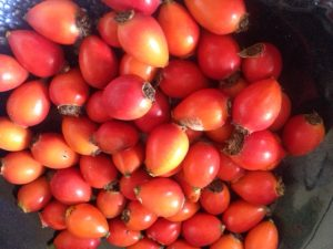 how to make rose hip oil with ecoactiveireland