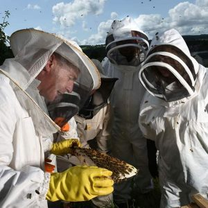 Beekeeping Courses for Beginners 2020