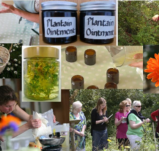 Herbal Medicine-Making